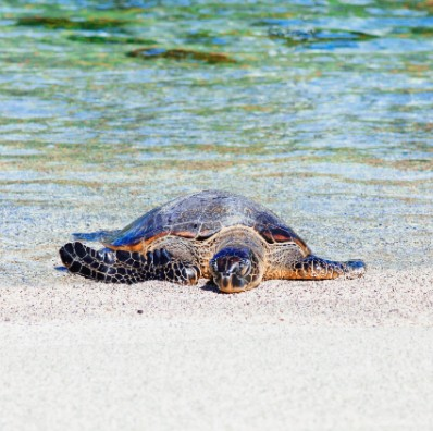 Small, turtle steps can pay off in a big way